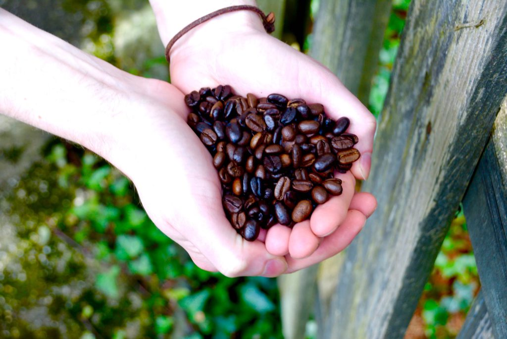 holding coffee beans outside with leaves